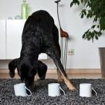 Hundetrick: Hütchenspiel 01