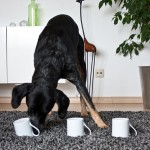 Hundetrick: Hütchenspiel 02