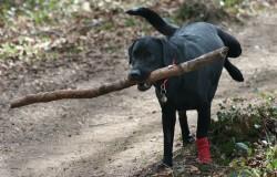 Hundetrick: Pinkeln