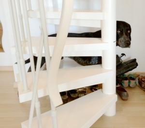 hund treppe ecke