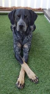 Hundetrick: Pfosten überkreuzen
