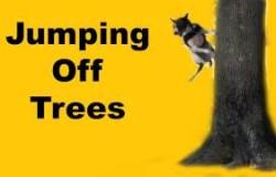 Hundetrick: an Bäume springen