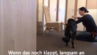 hundetrick-durch-die-arme-springen