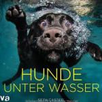 hunde-unter-wasser
