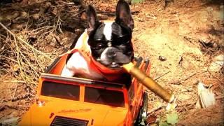 trickdogs-film-stars