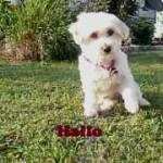 Kunststücke von Holly Hund
