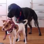 Hundetrick: Halsband anziehen