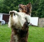 Hundetrick: Pfoten hoch!